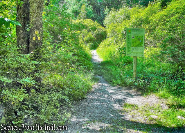 Mossy Glen Footpath