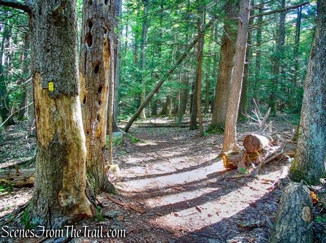 Enderly's Path