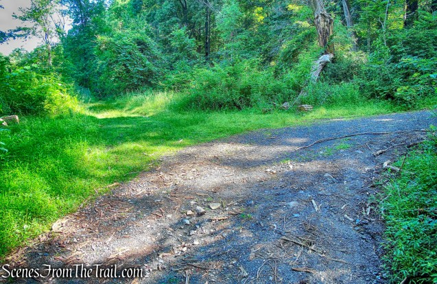 stay left at junction to Horn Hill Loop Mountain Bike Trail