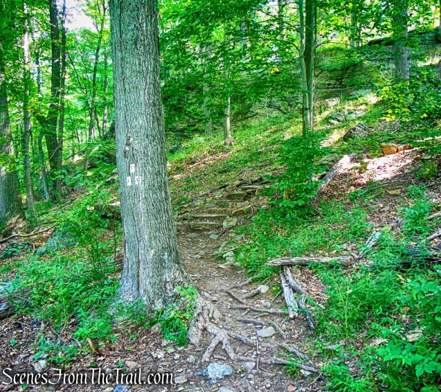 Fawn Trail