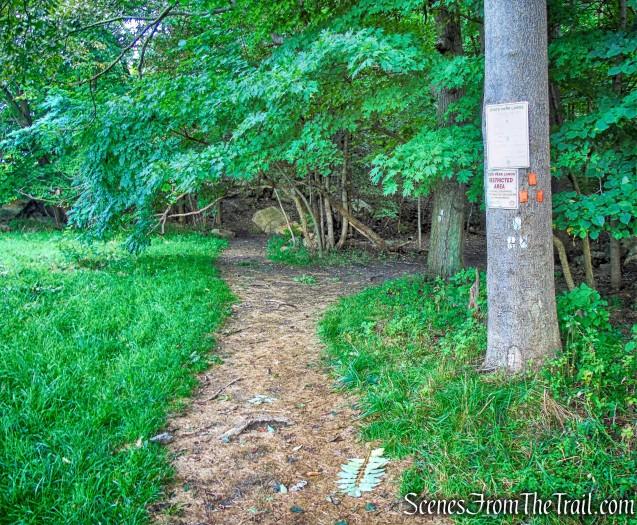 Butter Hill Trail