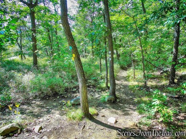 sharp left on yellow-blazed Stillman Trail