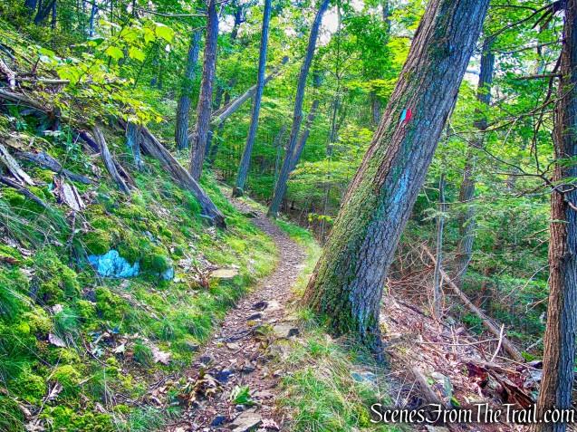 Bluebird Trail
