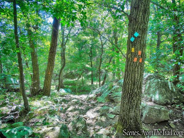 turn left onto the orange-blazed Butter Hill Trail