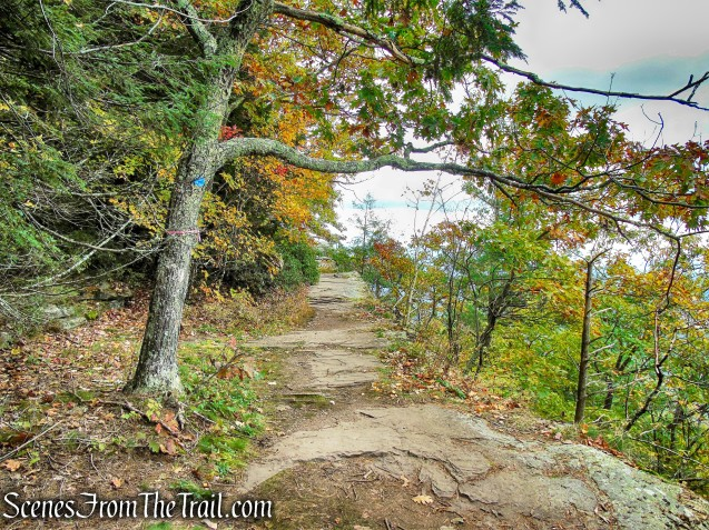 Escarpment Trail