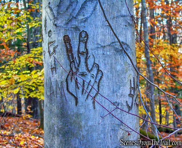tree graffiti - Stokes Trail