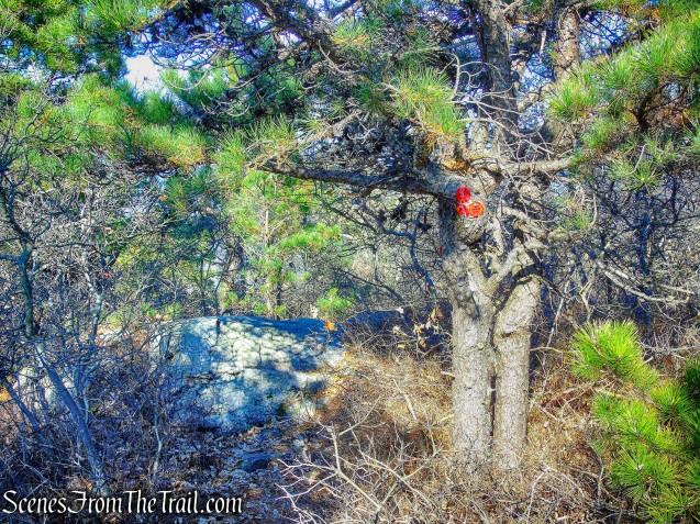 start of Overlook Trail