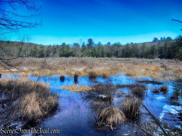 Pine Swamp