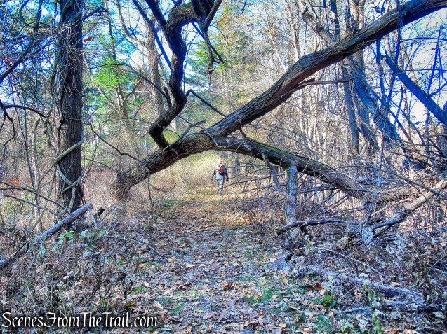 Tarrytown Lakes Trails