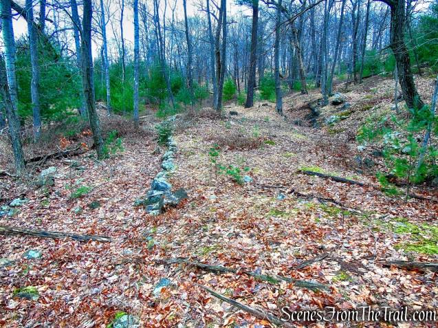 Pine Hill bushwack