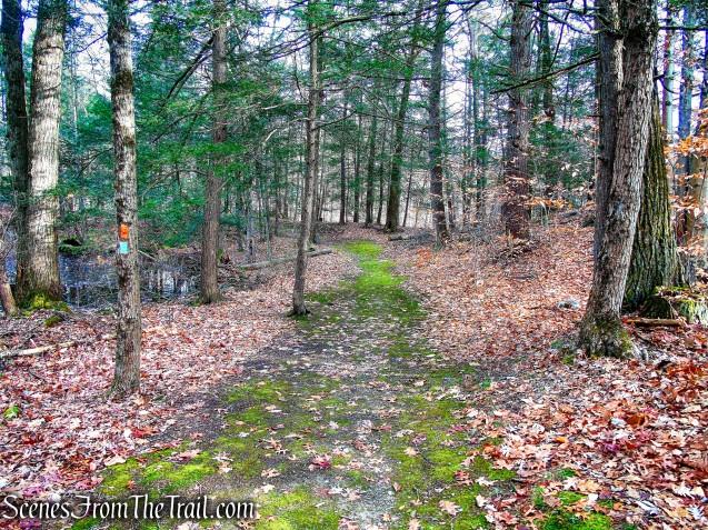 Gorilla Rock Trail