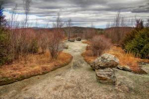 Lichen Trail
