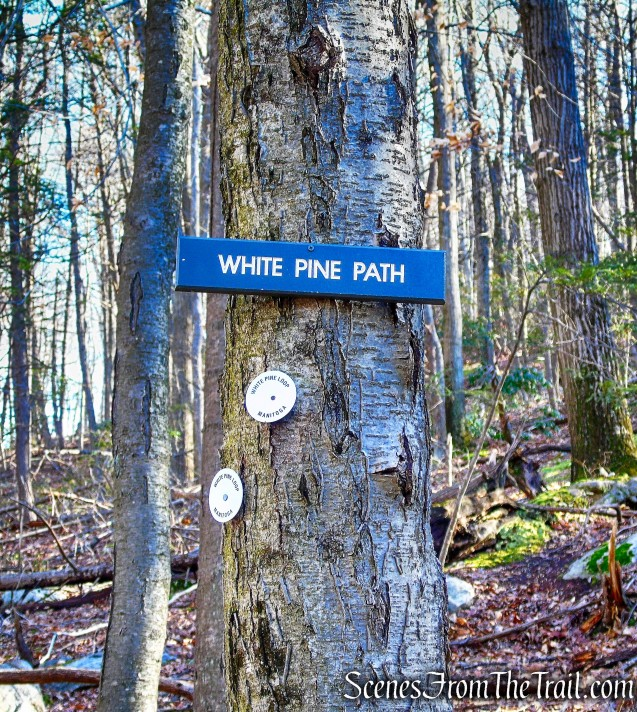 White Pine Trail