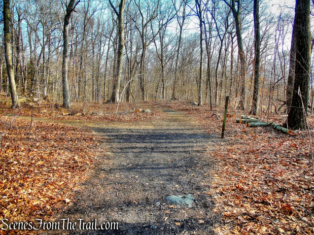 junction of Orange & Green Trails - Hart's Brook Park and Preserve