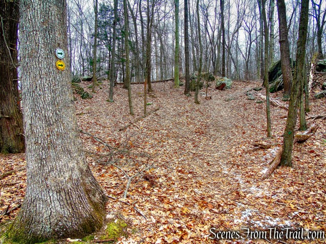 White and Yellow Trails - Halmi Preserve