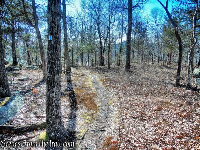 blue-on-white-blazed trail
