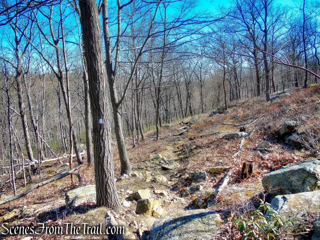Bobcat Trail