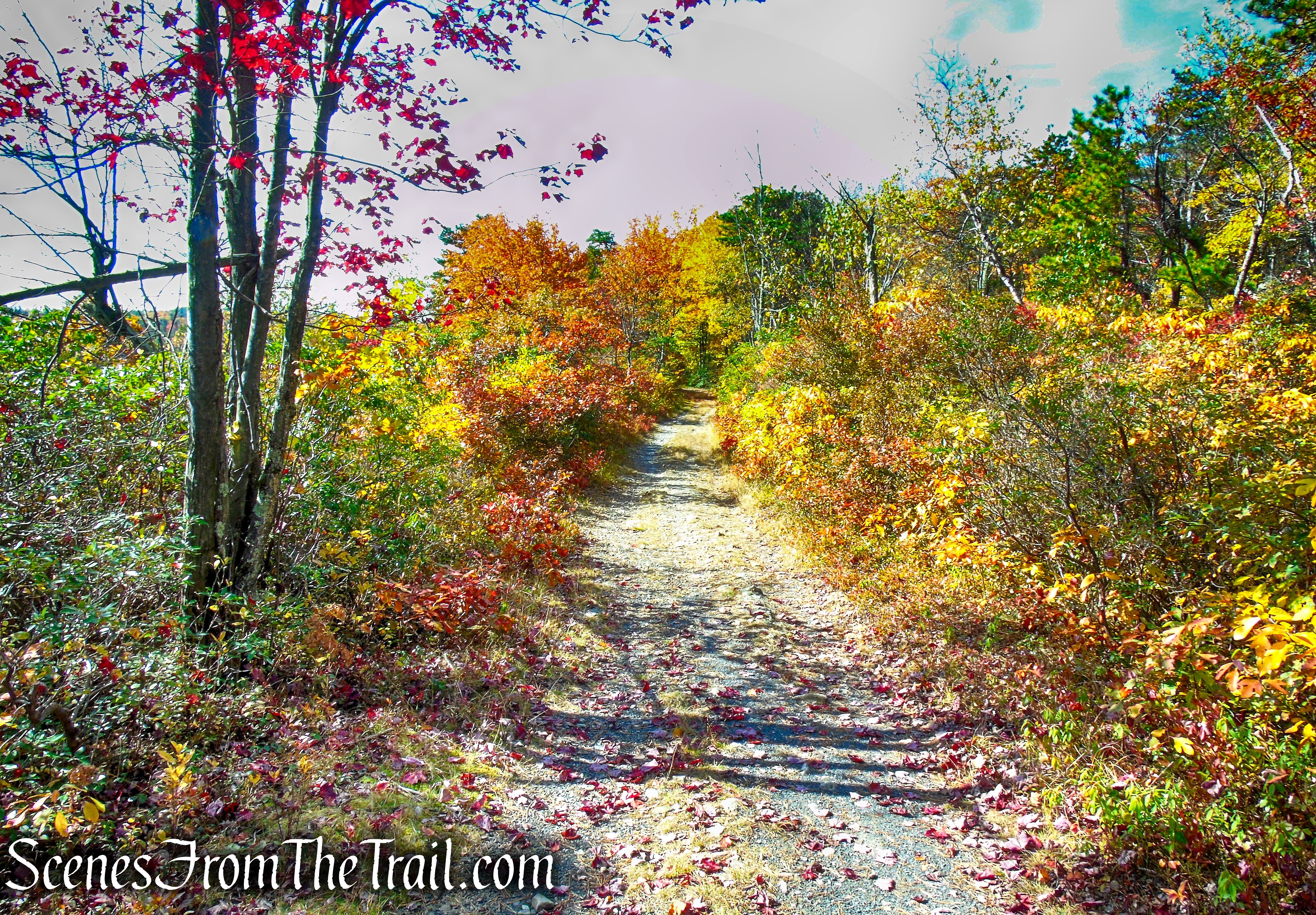 Lake Awosting Carriage Road - Minnewaska State Park Preserve