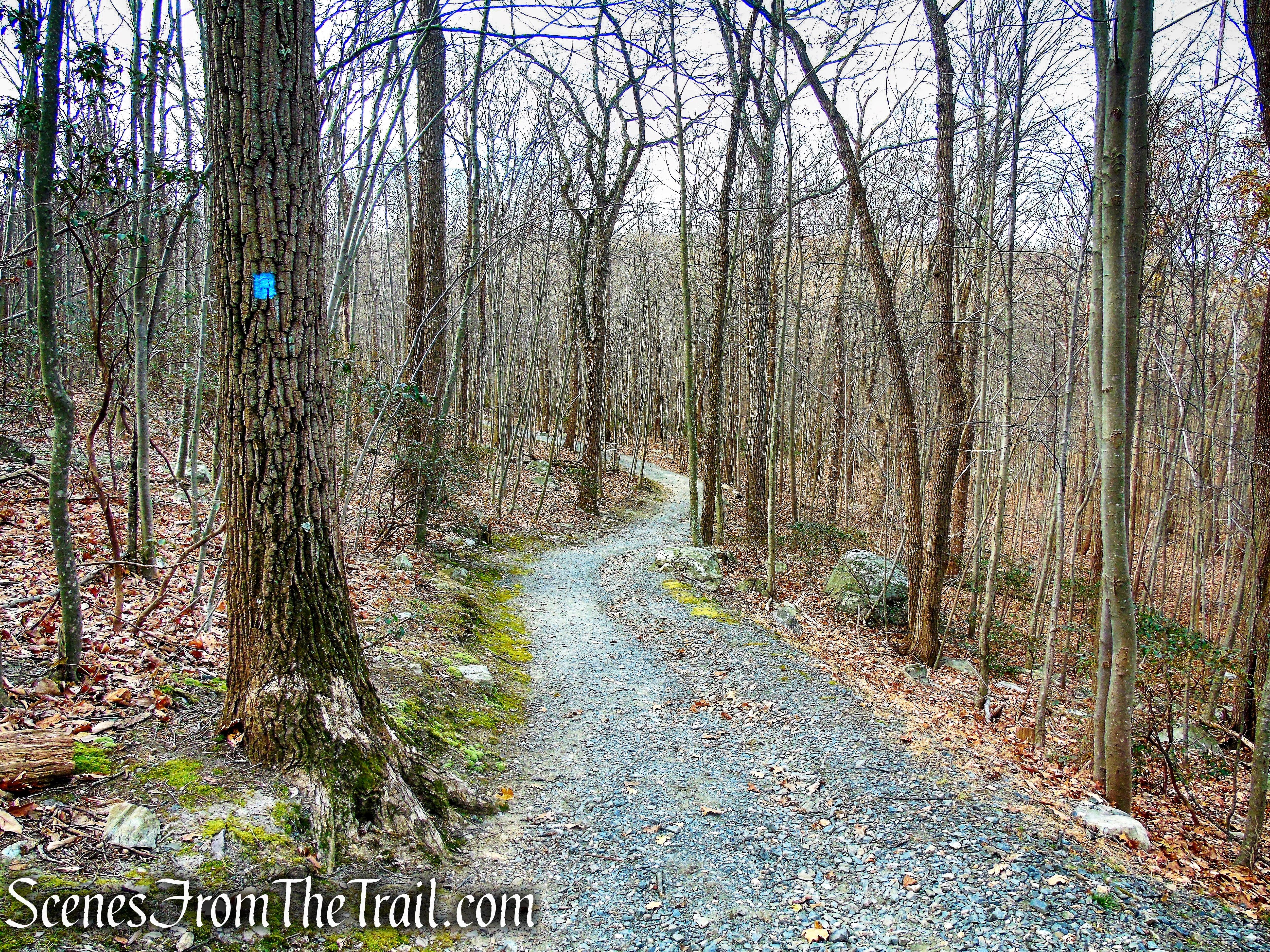 Blue Trail - Silas Condict County Park