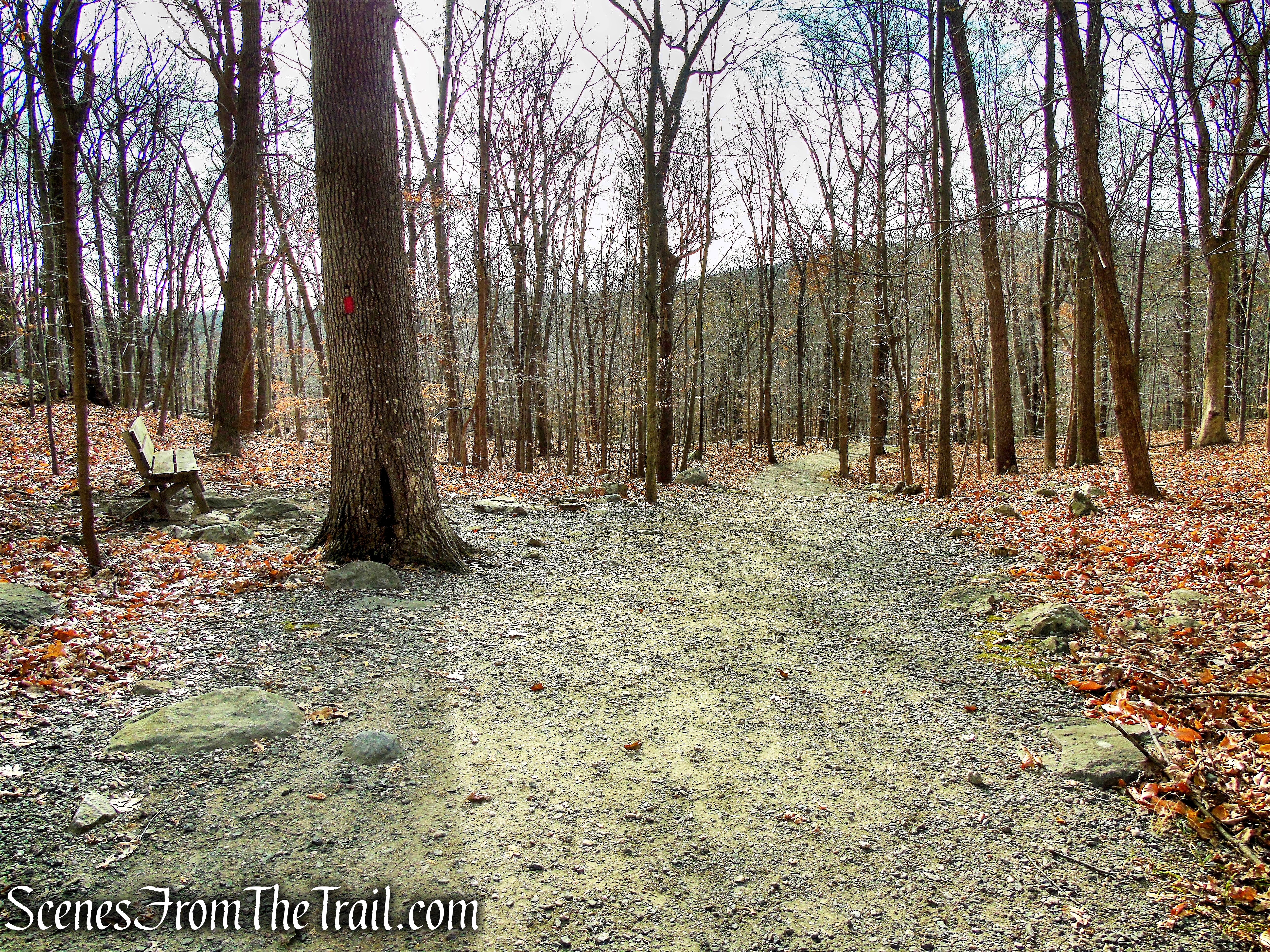 Red Trail - Silas Condict County Park