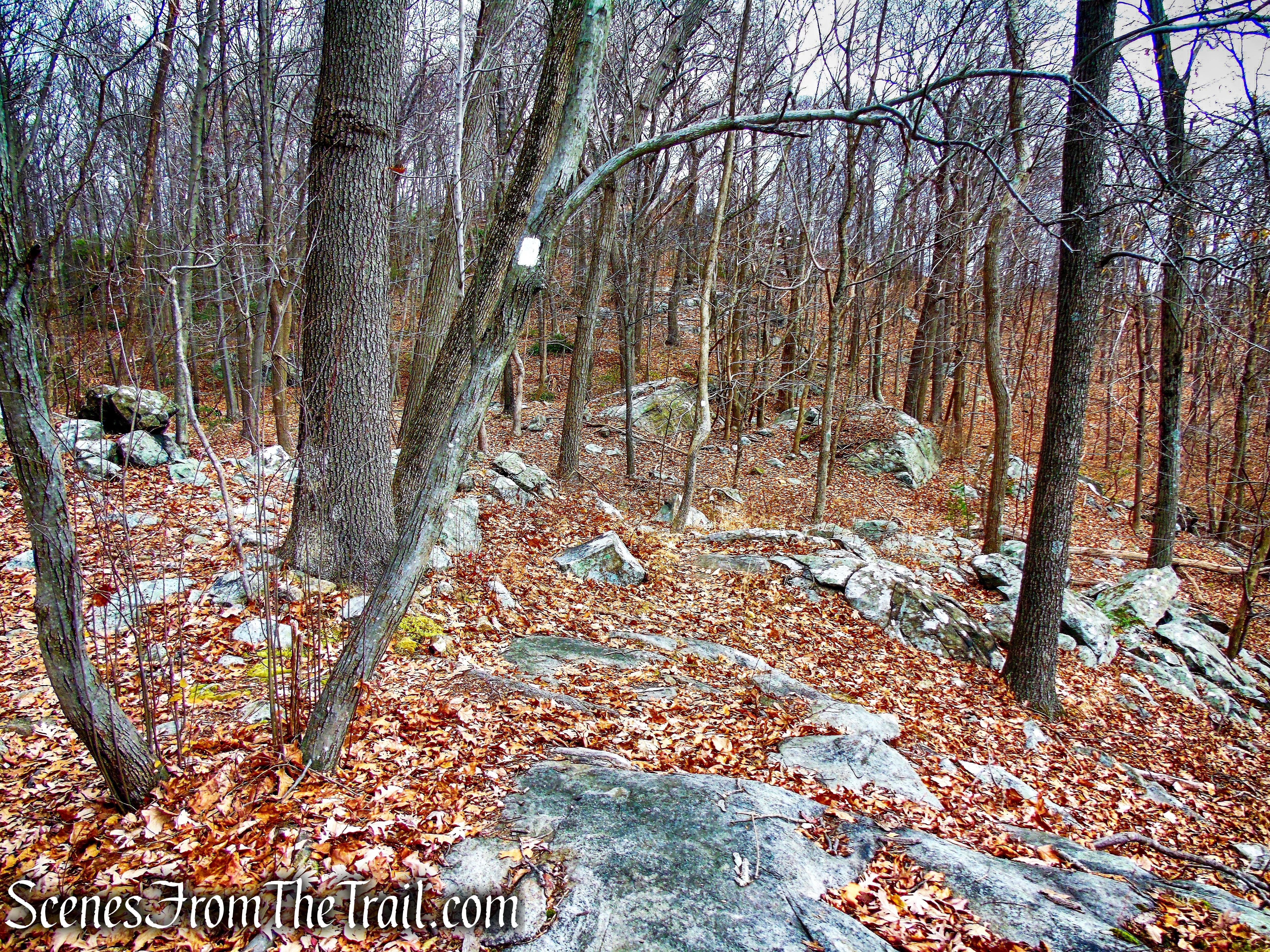 White Trail - Silas Condict County Park