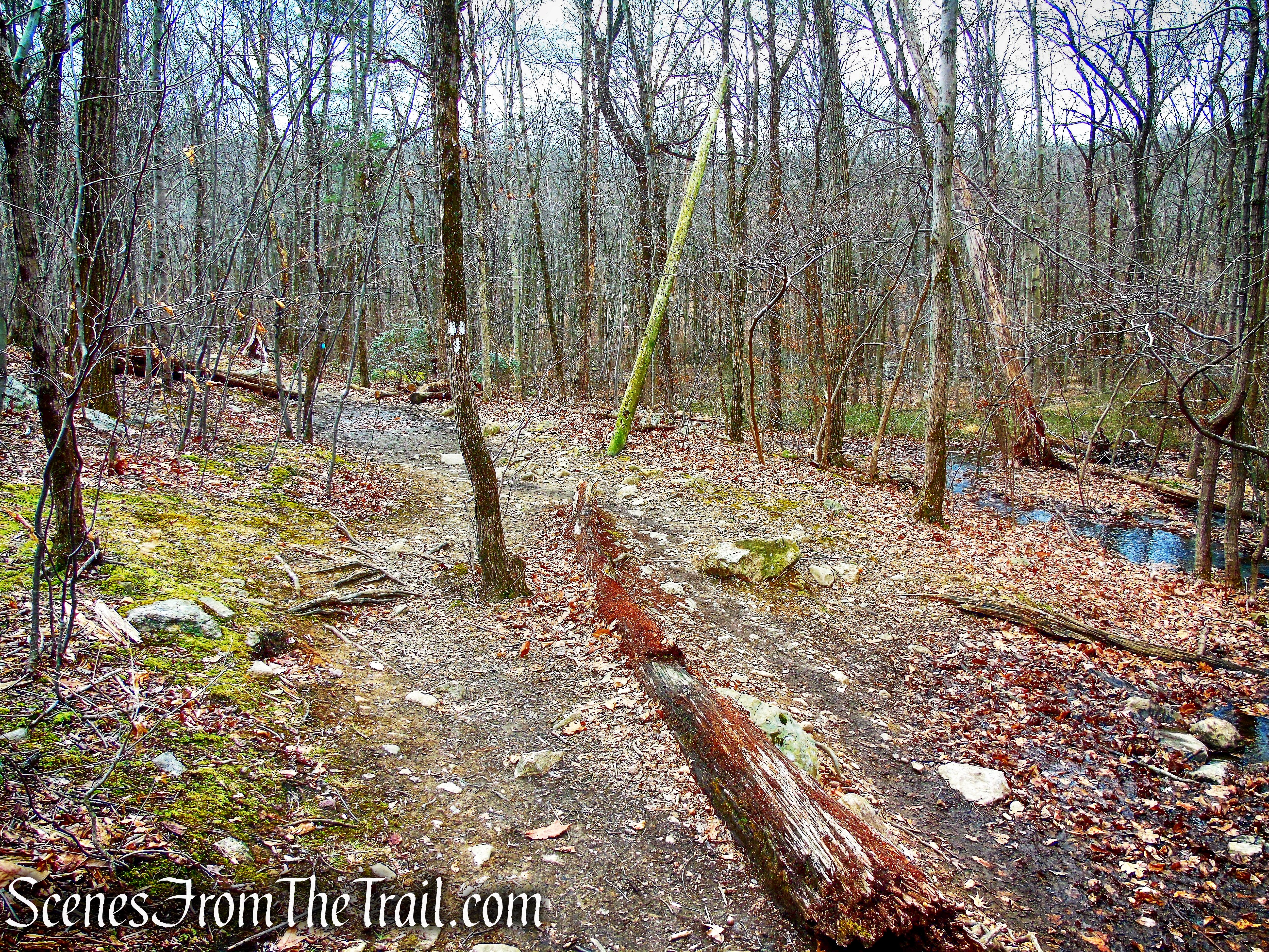 Todd Trail