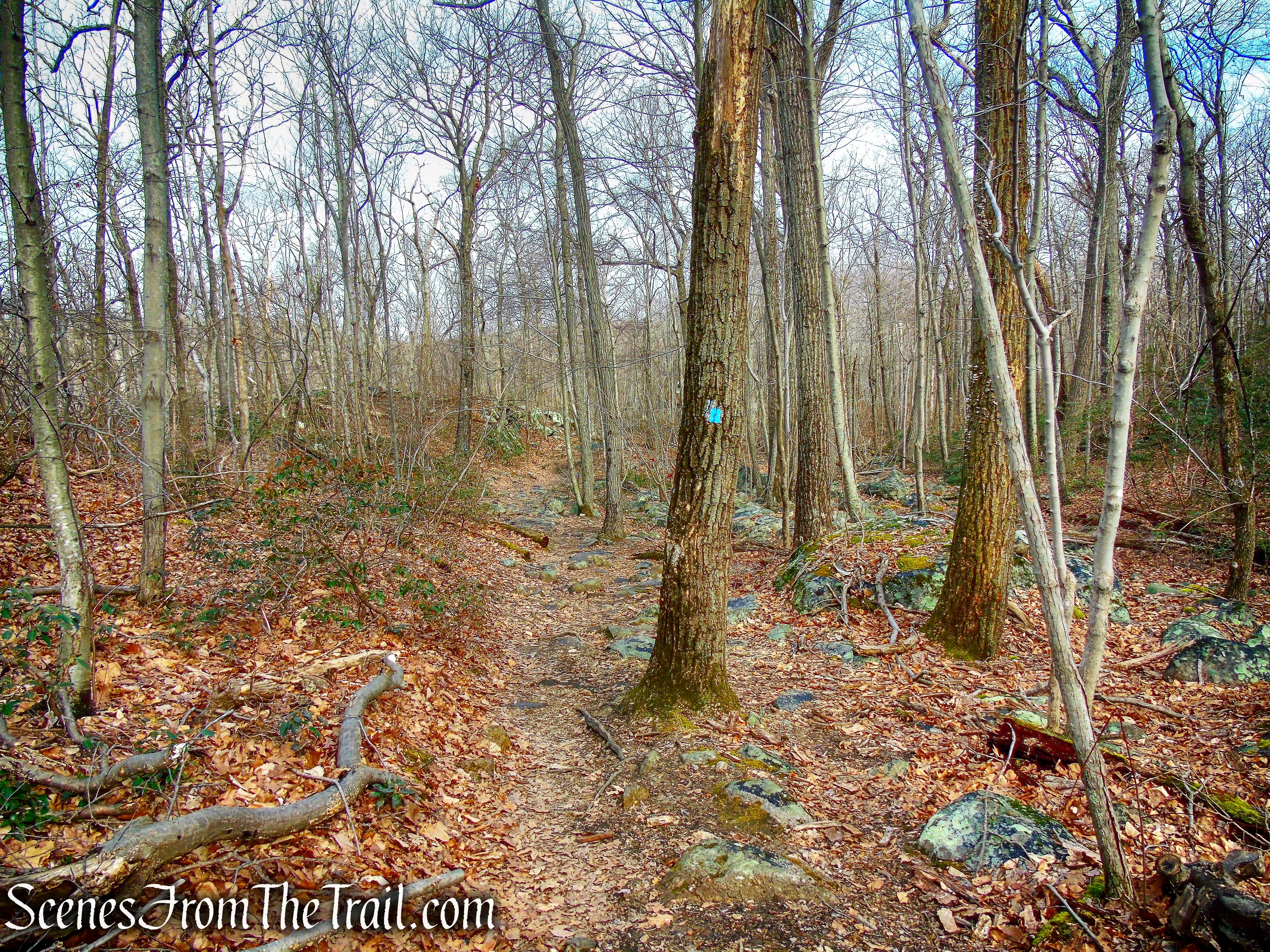 Blue Trail - Pyramid Mountain Natural Historic Area
