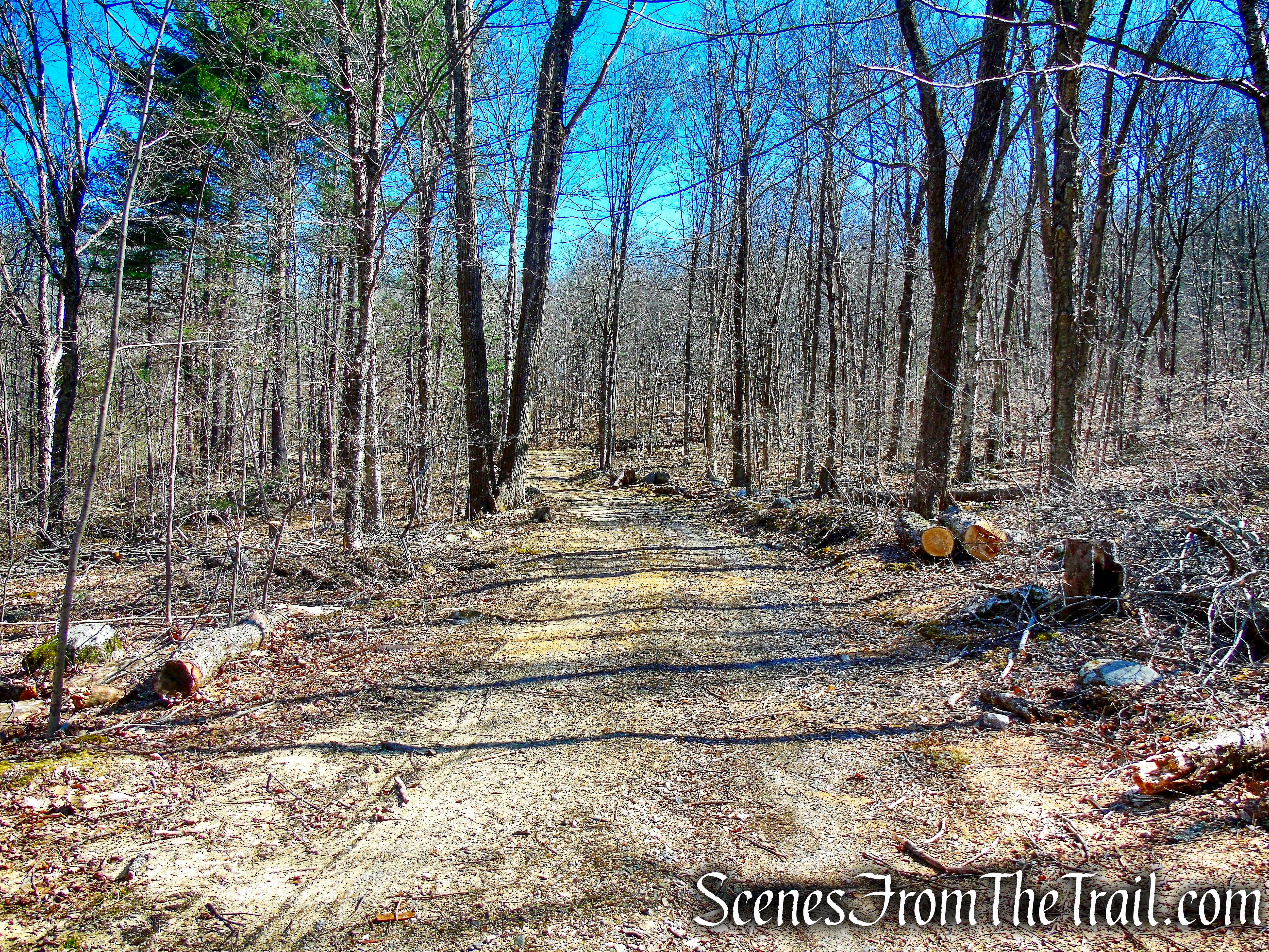 Forest Road - Mount Tom State Park
