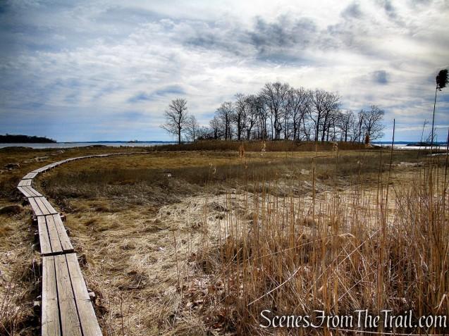 Salt Marsh - Hunter Island