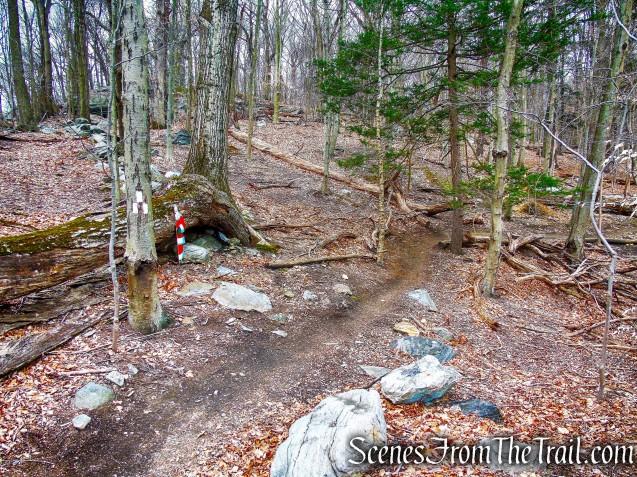 start of White Trail
