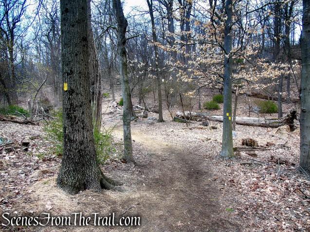 Yellow Trail - Taxter Ridge Park Preserve