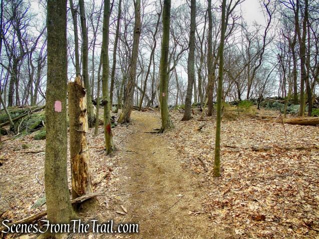 Pink Trail - Taxter Ridge Park Preserve