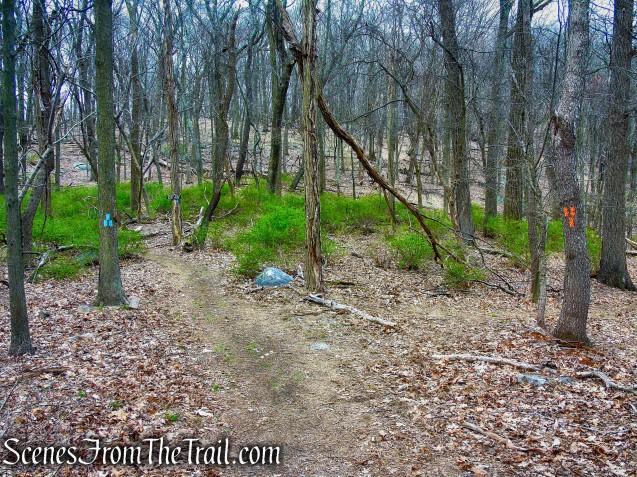 terminus of Orange Trail - Taxter Ridge Park Preserve