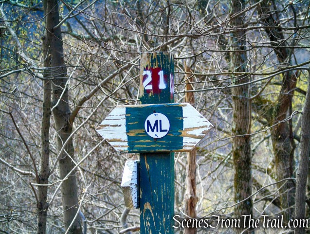 ML Trail – post #21