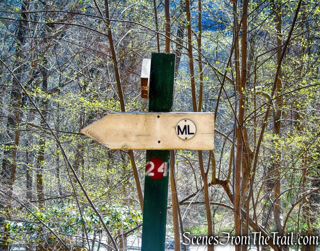 ML Trail – post #24