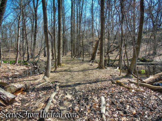 Hermit's Wetlands - Irvington Woods