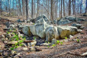 rock formation - Irvington Woods