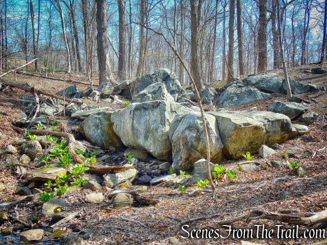 rock formation - Irvington Woods