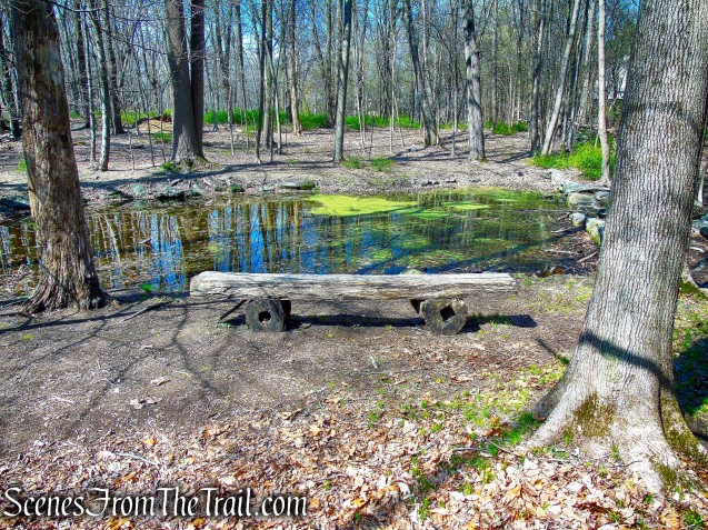 Ice Pond - Irvington Woods
