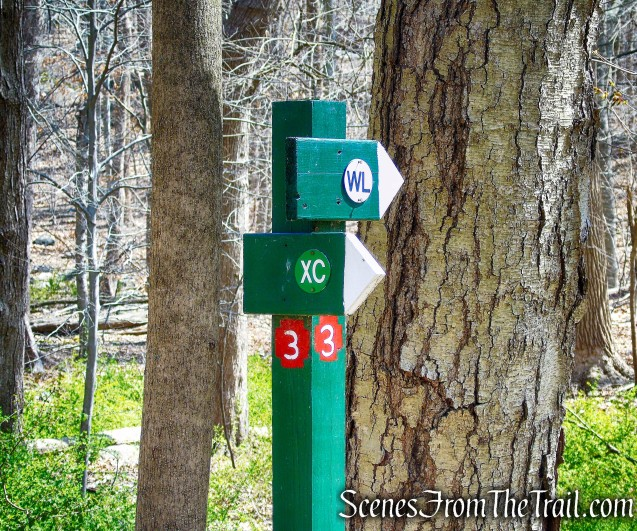 post #3 - Irvington Woods
