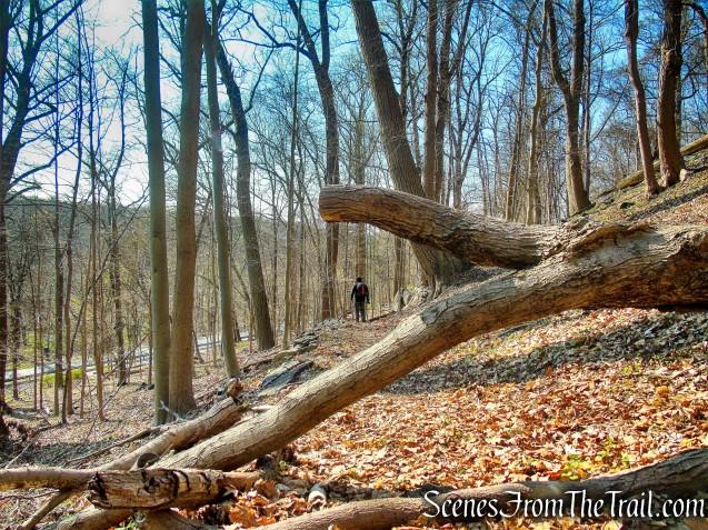 retrace steps to fallen tree