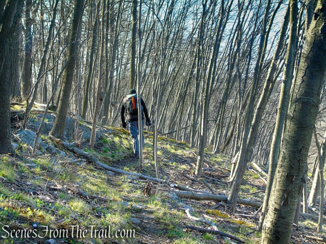 unmarked trail - French Hill Section