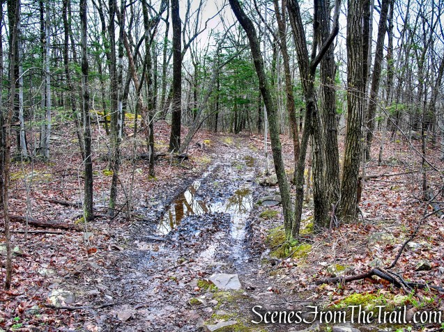 Metacomet Trail - South Mountain