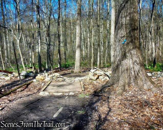 Crom Pond Trail - FDR State Park