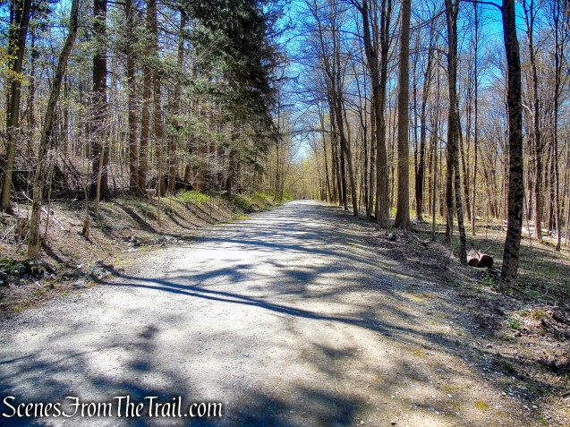 Forested Loop Trail - FDR State Park