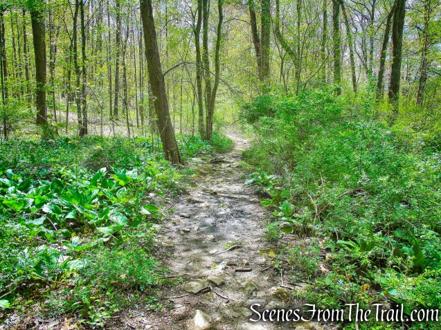 Blue Trail - Silver Lake Preserve