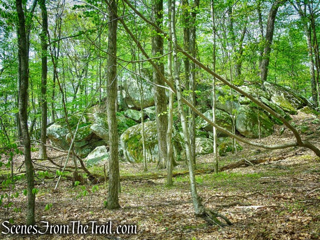 White Trail - Ward Pound Ridge Reservation