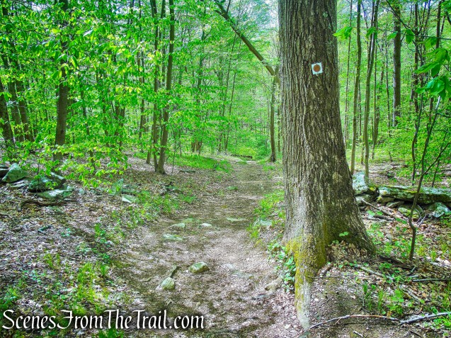 Brown Trail - Ward Pound Ridge Reservation
