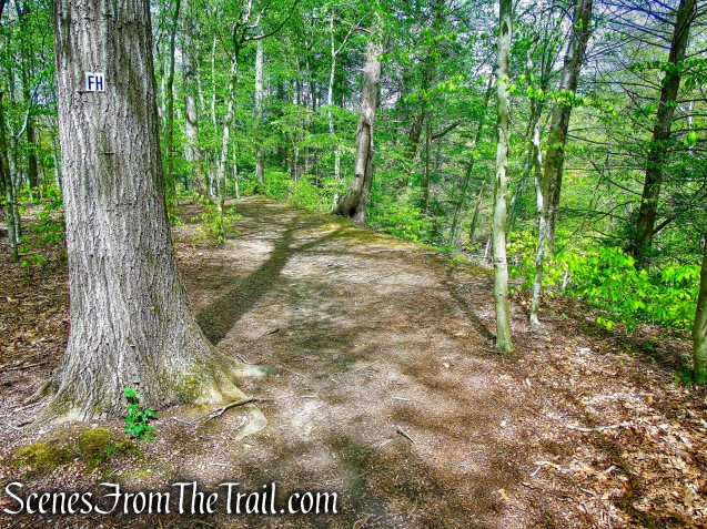 Fox Hill Trail - Ward Pound Ridge Reservation
