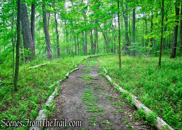 Westchester Wilderness Walk - Zofnass Family Preserve